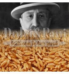 Semola Integrale di Grano Duro Senatore Cappelli (da agricoltura biologica)