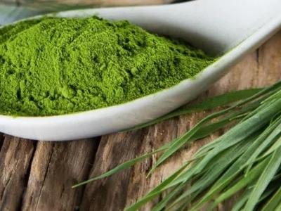 L'Alga Spirulina trattata in polvere